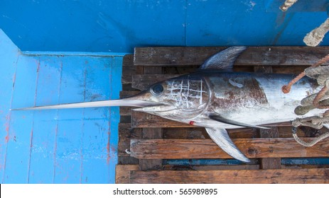 Swordfish caught on the boat