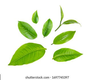 swt fresh green tea leaf isolated on white background