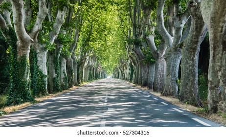 Sycamore avenue somewhere in Provence, France