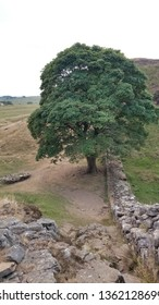 Sycamore Gap (from the side), Hadrian's Wall, Northumberland, England