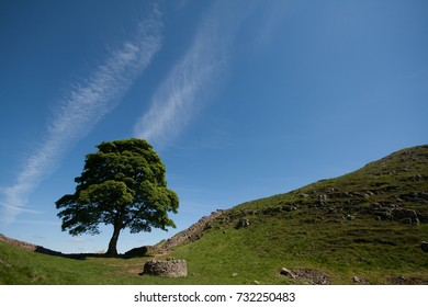 Sycamore Gap in Hadrians Wall with blue sky and contrails, used as a film location in Robin Hood Prince of Theives