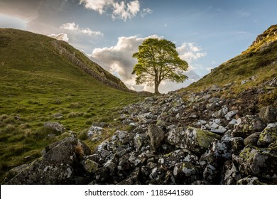 Sycamore Gap, Hadrian's Wall, Northumberland, England