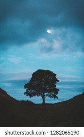 sycamore gap image featured in robin hood