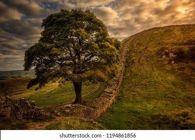 Sycamore gap late evening