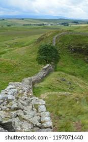 Sycamore Gap on Hadrian's Wall, Northumberland, England.