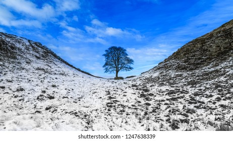 Sycamore Gap on Hadrian's Wall, County of Northumbeland, England
