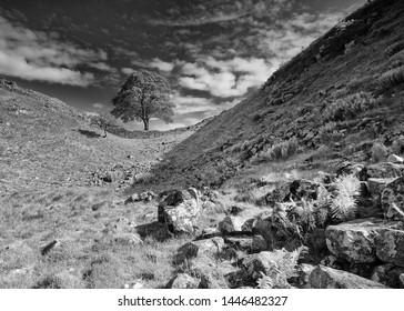 Sycamore Gap on Hadrians Wall