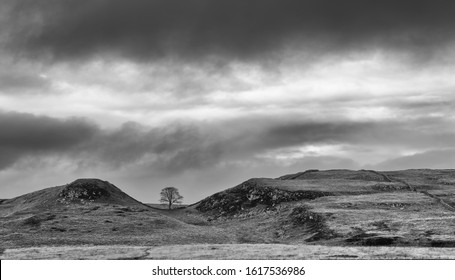 Sycamore Gap on Hadrian's Wall in monochrome.