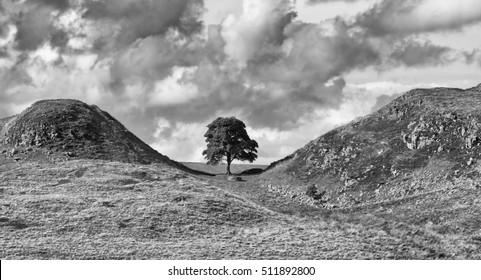 Sycamore Gap on Hadrian's Wall. A high contrast monochrome image.