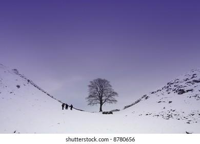 Sycamore Gap on Hadrians Wall where Robin Hood was filmed