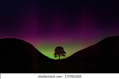 Sycamore Gap tree at night silhouetted by the northern lights in Northumberland near Adrians Wall, United Kingdom