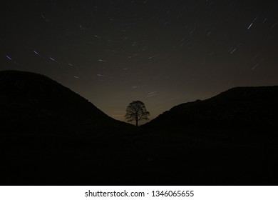 Sycamore Gap tree in Northumberland at night