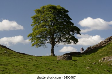 Sycamore Gap, used in filming Robin Hood Prince of Thieves