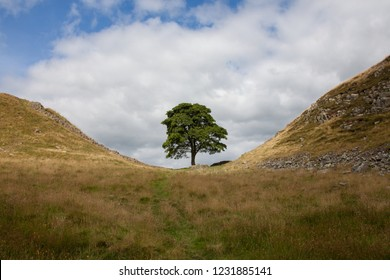 sycamore gap view