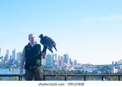 SYDNEY - AUGUST 12 2017:Australian animal trainer carry an eagle  in Taronga Zoo Sydney New South Wales Australia.
