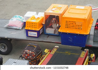 SYDNEY, AUSTRALIA -20 JUL 2018- Crates with dogs being loaded into an airplane at the Kingsford Smith airport (SYD).