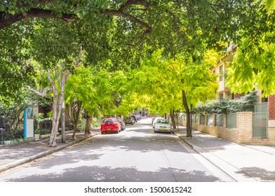 Sydney, Australia - December 26, 2012: Tree-lined Nobbs Street, Surry Hills, Sydney, NSW, Australia