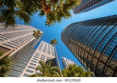 Sydney Australia - February 10, 2016: Looking up to some of Sydney's modern skyscrapers: from left to right Philip Tower, Chifley and 1 Bligh street Towers. Nature vs human achievement concept.
