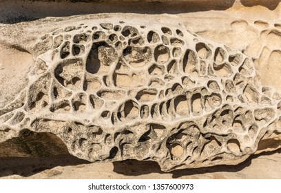 Sydney, Australia - February 11, 2019: Closeup of Spectacular rock outcrop at Bronte Beach South cliffs, made by erosion.. Sponge-like borders of shell like plates sticking out.