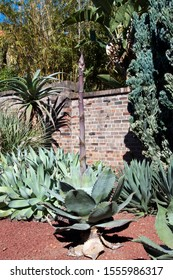 Sydney Australia, large unidentified agave plant with pink flower spike in succulent garden