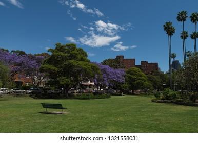Sydney, Australia - November 2019: Jacaranda Trees at Milsons Pt, Sydney, Australia
