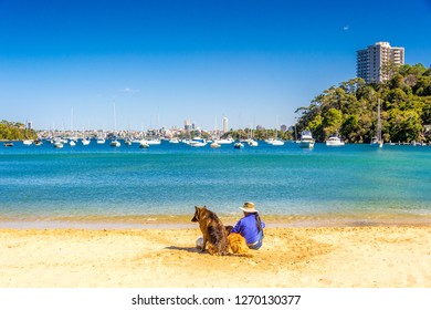 Sydney, Australia. Sep 13th 2017. Two dogs play with their owner at this Sydney beach at Sirius Cove Reserve in Sydney Harbour.