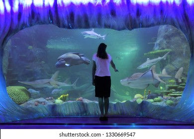 SYDNEY - FEB 21 2019:Woman looking at Sharks in Sea Life Aquarium in Sydney New South Wales Australia that displaying more than 700 species and 13,000 individual fish and other sea and water creatures