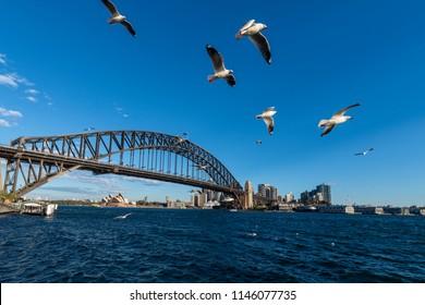 Sydney Harbor Bridge with sea gulls, NSW, Australia