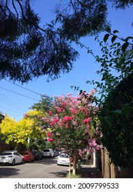 Sydney, New South Wales, Australia, 23 January 2021, Newtown suburb street in summer