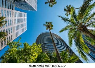 Sydney, NSW, Australia - January 21, 2020: Upwards perspective of major high rise landmarks in Sydney CBD: Governor Philip & Macquarie Tower, 1 Bligh Street and Winter Garden Tower with sunlit trees.