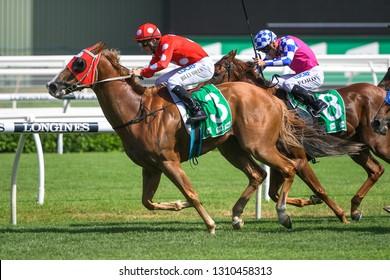 Sydney, NSW, Australia - January 26, 2019: Jockey Billy Owen rides Junglized to victory in race 6, the Tab.Com.Au Handicap, at the Royal Randwick Racecourse.