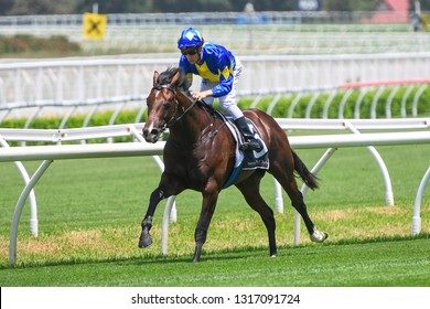 Sydney, NSW, Australia - January 26, 2019: Jockey Blake Shinn rides Dawn Passage (left) to victory in race 1, the Australian Turf Club Handicap, during Randwick Race Day at the Randwick Racecour