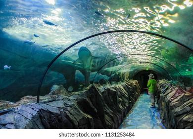 SYDNEY, NSW, AUSTRALIA - OCTOBER 15, 2015: Underwater Tunnel with Sharks