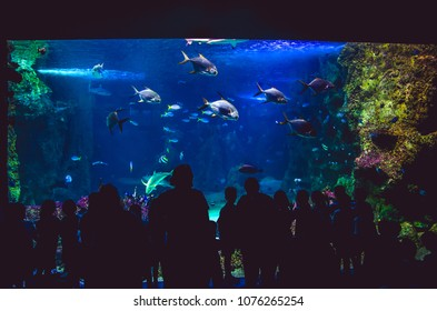 Sydney, NSW/Australia - 26th October 2017: People watching fishes in SEA LIFE Sydney Aquarium