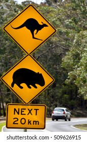 SYDNEY - OCT 23 2016:Car pass a warning road sign to beware of Kangaroo and Wombat. Hundreds of thousands of wild animals are killed each year after being hit by motor vehicles on Australian roads.