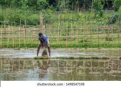 SYLHET, BANGLADESH - APRIL 10, 2018: A farmer in a loincloth digs a flooded field with a hoe in preparation for planting rice.