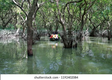 """Sylhet, Bangladesh - September 21, 2018: Ratargul is the only freshwater swamp forest in the country and affectionately called the """"Amazon of Bangladesh"""", Sylhet, Bangladesh on September 21, 2018."""