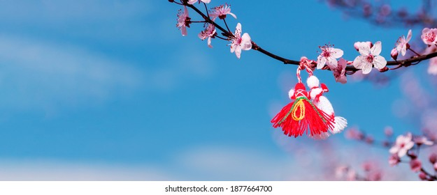 Symbol of beginning of spring is martenitsa on blossoming tree branch against blue sky. Decorations made of red and white thread are presented in Bulgaria on 1st of March holiday. Banner, copy space