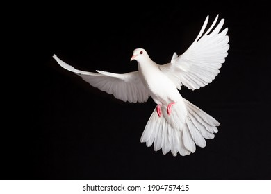 Symbol of freedom for the world