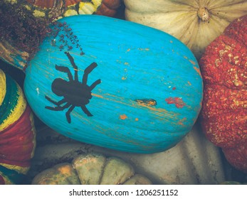 Symbol of Halloween and Harvesting or Thanksgiving concept. Black horror spider paint on vibrant blue color pumpkins with colorful pumpkins. Vintage style photos and filtered process . Selective focus