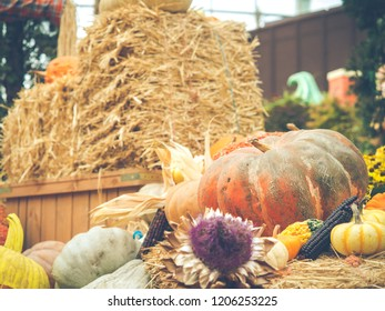 Symbol of Halloween and Harvesting or Thanksgiving concept. Decorative yellow big pumpkins with colorful pumpkins.  Vintage style photos and filtered process . Selective focus.