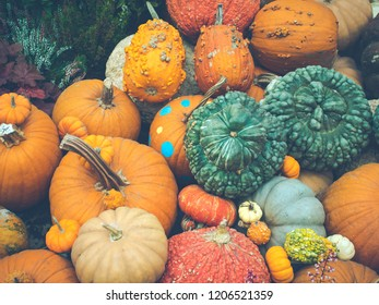 Symbol of Halloween and Harvesting or Thanksgiving concept. Decorative colorful pumpkins on display at the market in vintage style photos and filtered process . Selective focus.