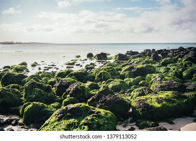 The symbol of Jeju Island is basalt and  seaweed which can be seen on the beach.
