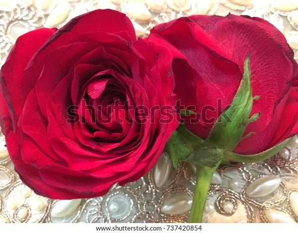 Symbol Lovebeautiful Red Rose Wallpapers Desktop Stock Photo