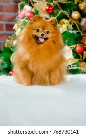 The symbol of the new 2018 is a yellow dog on the background of a decorated Christmas tree