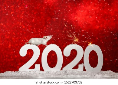 Symbol of New Year 2020 - white or metal (silver) rat mouse.Christmas card New Year 2020 .White mouse stands at 2020 and looks at sparklers