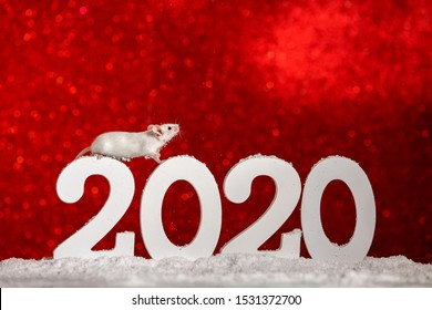 Symbol of New Year 2020 - white or metal (silver) rat mouse.Christmas card New Year 2020 .White mouse stands at 2020