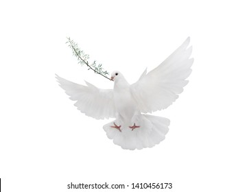 symbol White dove with palm branch isolated on white background
