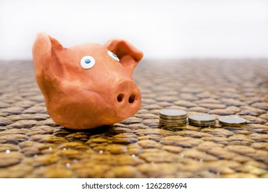 Symbol of Year 2019. Pig made from Play Clay.