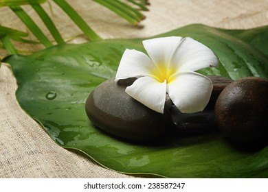 the symbolic by flower for natural spa healthy